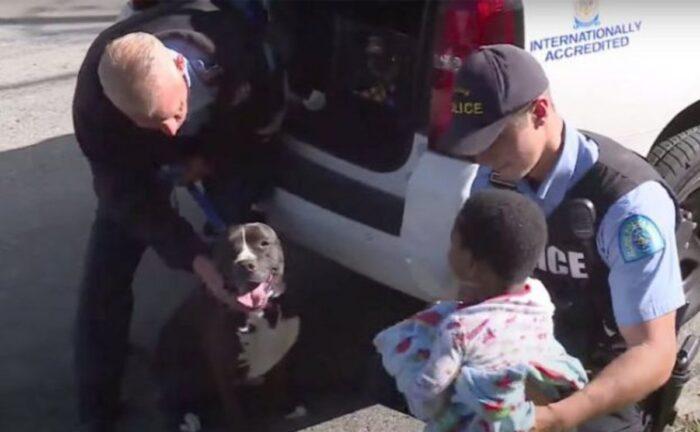 Perro callejero cuida a un niño que estaba perdido